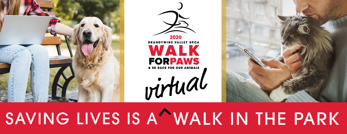 2020 Virtual Walk for Paws